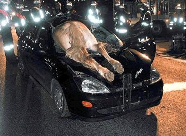 110411 Donkey Crashed